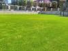 Kunstrasen im Garten (5)